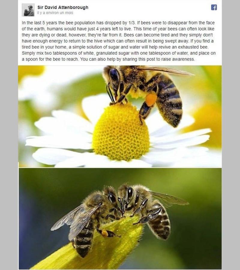 Faut-il nourrir les abeilles fatiguées avec du sucre ? Sans_117