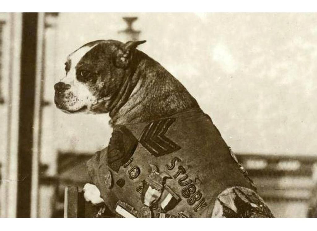 Commémorations de 1918 : des animaux à honorer, eux-aussi Sans_779