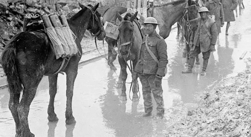 Commémorations de 1918 : des animaux à honorer, eux-aussi Sans_780