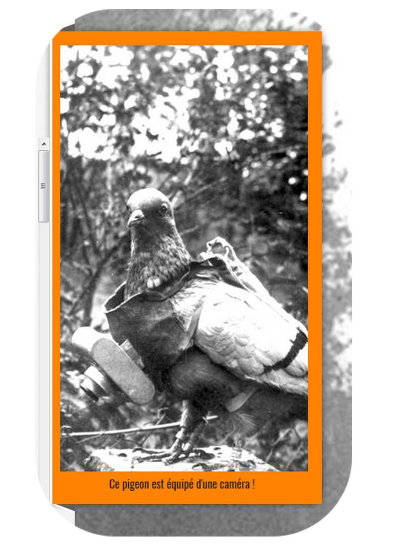 Commémorations de 1918 : des animaux à honorer, eux-aussi Sans_781