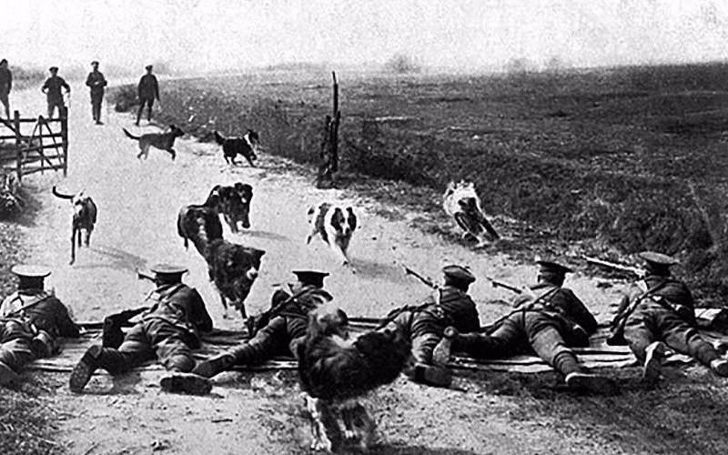 Ces animaux ont changé le cours de la guerre 14-18 Sans_784