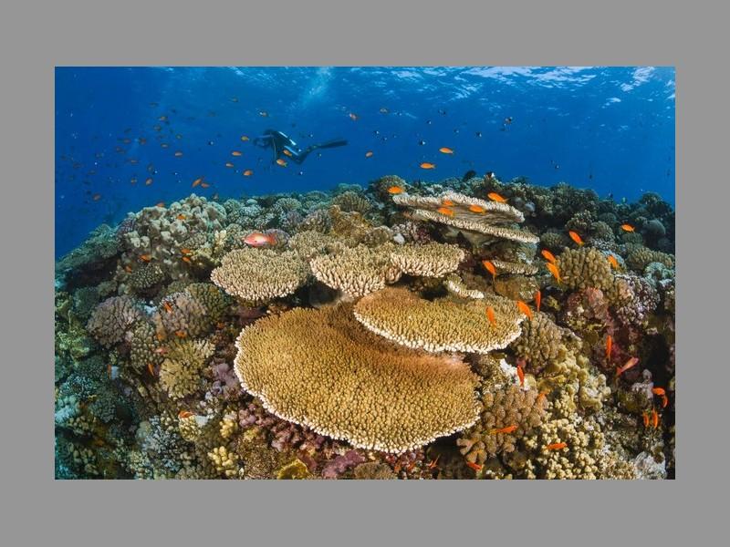 Pourquoi les barrières de corail valent des milliards Sans_t23