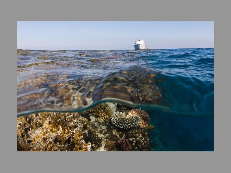 Pourquoi les barrières de corail valent des milliards Sans_t24