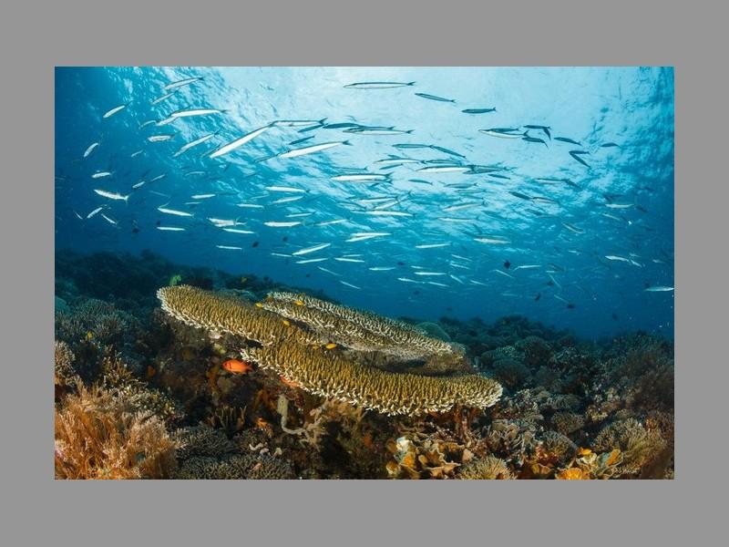 Pourquoi les barrières de corail valent des milliards Sans_t25