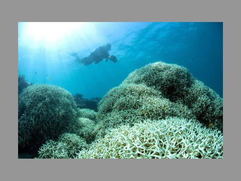 Pourquoi les barrières de corail valent des milliards Sans_t26