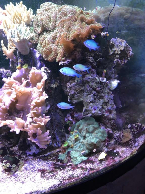 aquarium 2020 Img_8018