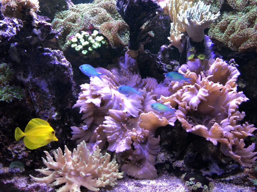aquarium 2020 Img_8019