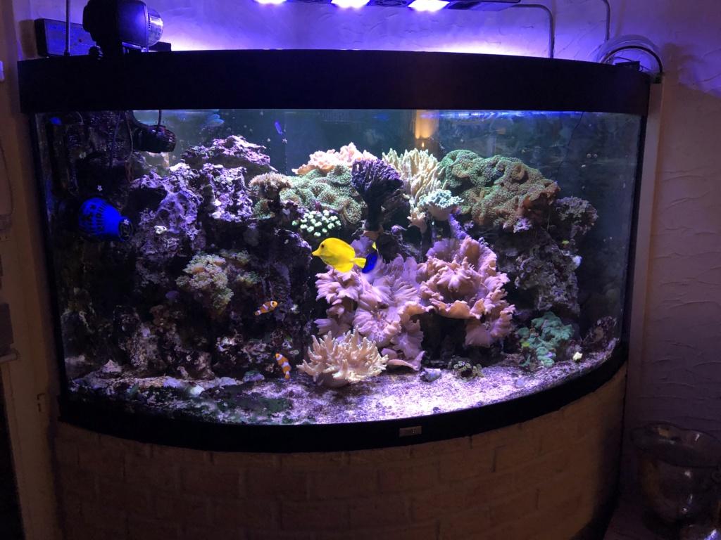 aquarium 2020 Img_8112