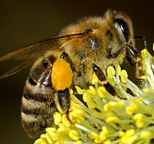 test de mémoire Bees-110