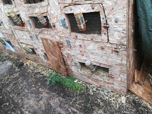 Les Rex de l'Ermite -- une histoire de lapin - Page 7 43727010
