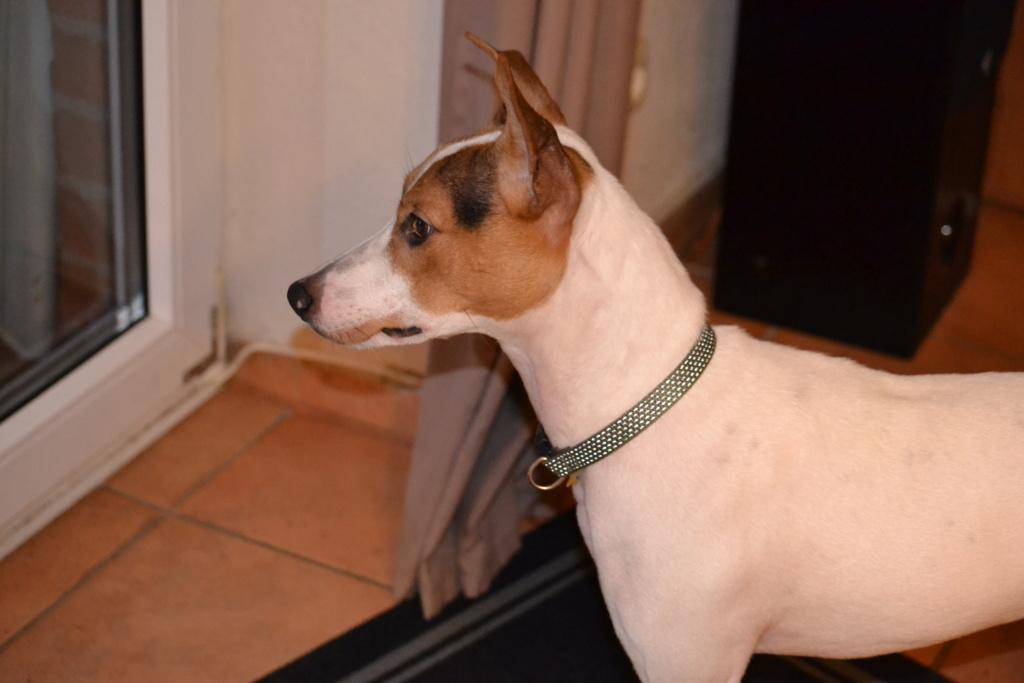 Bildertagebuch - Jasper: kleiner Sunnyboy auf der Suche nach seinem Zuhause! - VERMITTELT- 01310