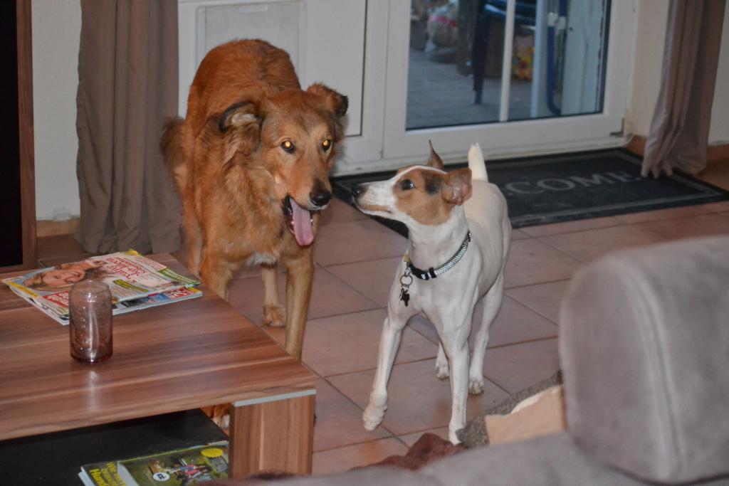Bildertagebuch - Jasper: kleiner Sunnyboy auf der Suche nach seinem Zuhause! - VERMITTELT- 02110