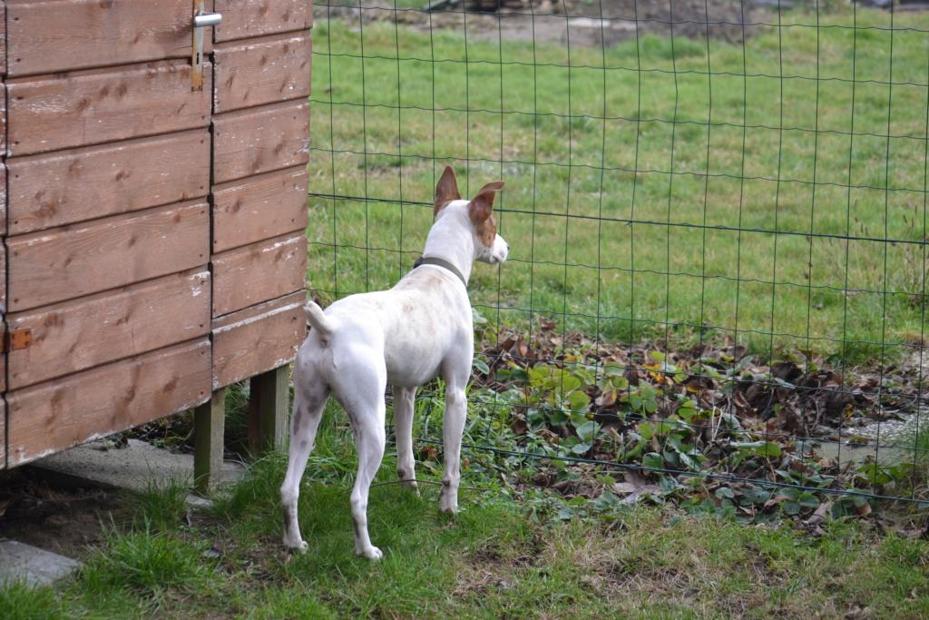 Bildertagebuch - Jasper: kleiner Sunnyboy auf der Suche nach seinem Zuhause! - VERMITTELT- 04010