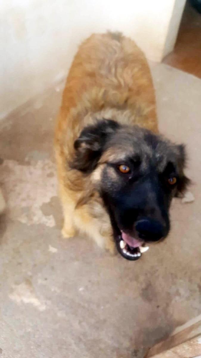 Bildertagebuch - SIRIUS, intelligenter hübscher Hundestern möchte so gerne endlich ein Zuhause - VERMITTELT - 70833810
