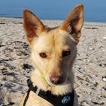 Bildertagebuch - Bimba wollte die Familie nicht mehr.... und landete bei Tierschutzkollegen in Mailand Bimba110