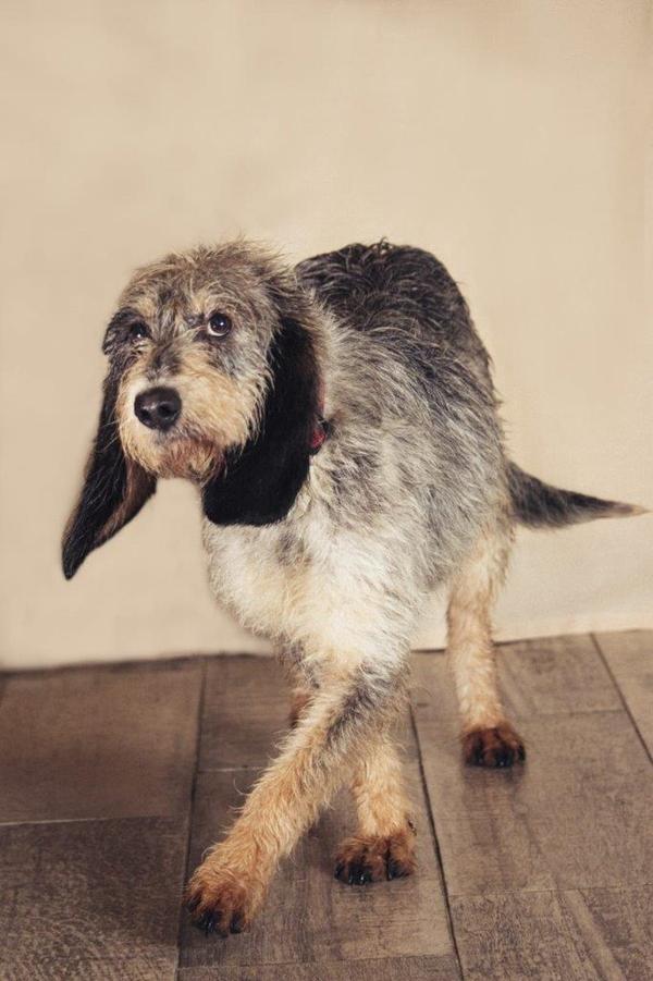 Bildertagebuch - Dina, sind die langen, großen Ohren nicht zum verlieben - ÜBER EINE ANDERE ORGA VERMITTELT - Dina210