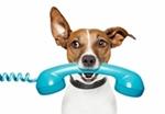 Bildertagebuch - Carlotta, wer zeigt ihr das Hunde 1x1 - über andere Orga vermittelt - Hund-a11