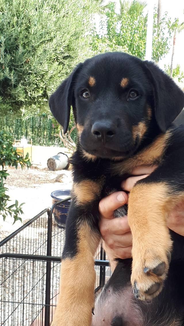 Bildertagebuch - Odin möchte ein Platz in Ihrem Herzen - VERMITTELT - Hund1_11