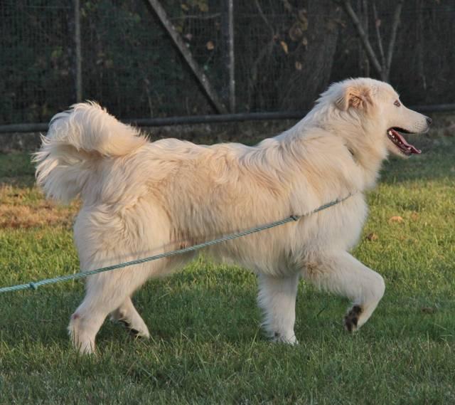 Bildertagebuch - ROCKY muss sich leider wieder auf die Suche nach einem Zuhause machen - VERMITTELT! Hund1_19