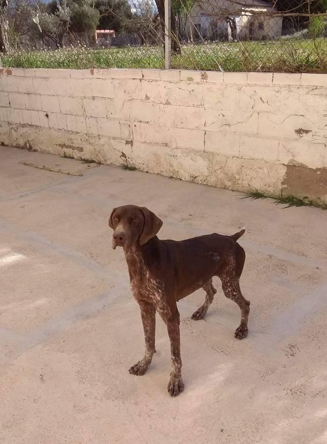Bildertagebuch - Cosmo streunte über mehrere Tage in den Bergen umher, bis Tierschützer sich ihm annahmen Hund1_20
