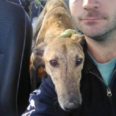 Bildertagebuch - Gail, zum jagen zu alt geworden, sollte er einfach entsorgt werden  Hund1_21