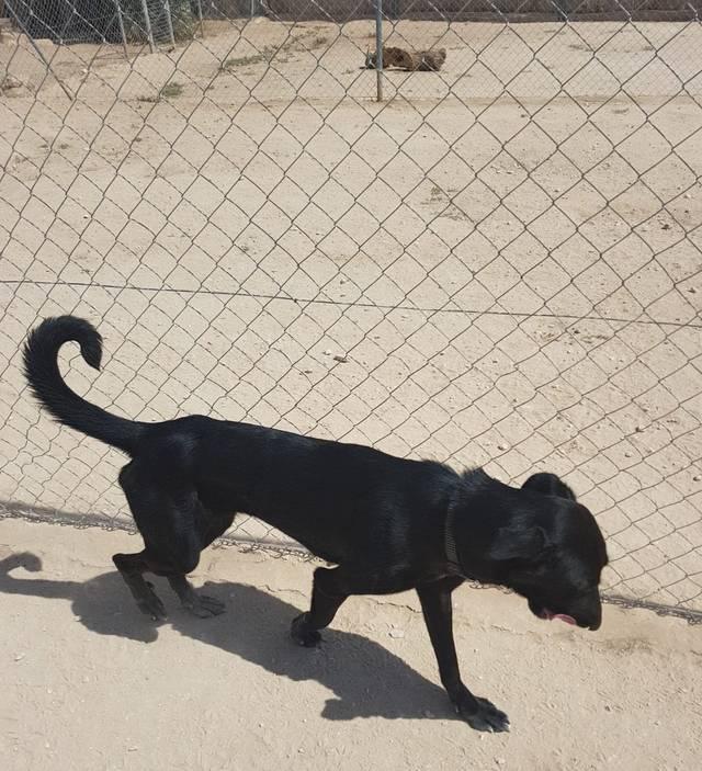 Bildertagebuch - Tyrone, ein ganz lieber, etwas zurückhaltender Bursche sucht - VERMITTELT - Hund3_13
