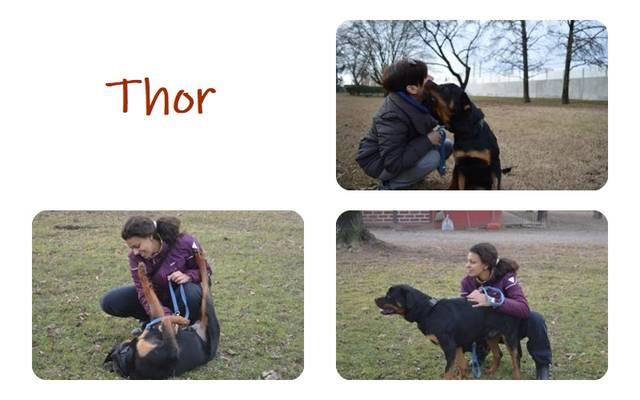 Bildertagebuch - Thor II, ein Traum von einem Rottweiler - über andere Orga vermittelt - Hund3_18
