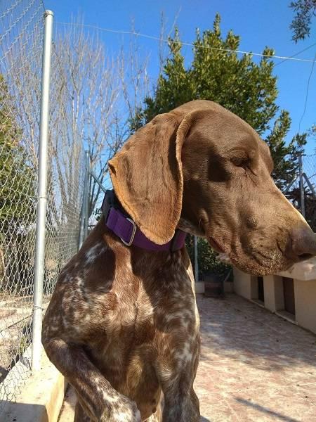Bildertagebuch - Cosmo streunte über mehrere Tage in den Bergen umher, bis Tierschützer sich ihm annahmen Hund3_19