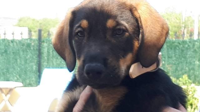 Bildertagebuch - Alba, süße Knuddelmaus möchte die Welt erobern - VERMITTELT - Hund4_10