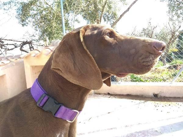 Bildertagebuch - Cosmo streunte über mehrere Tage in den Bergen umher, bis Tierschützer sich ihm annahmen Hund4_16