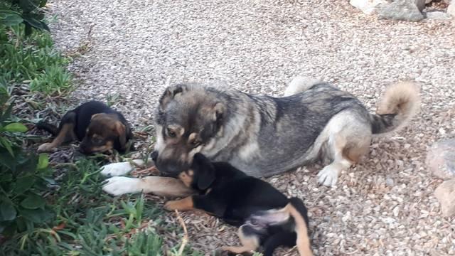 Bildertagebuch - Odin möchte ein Platz in Ihrem Herzen - VERMITTELT - Hund5_11