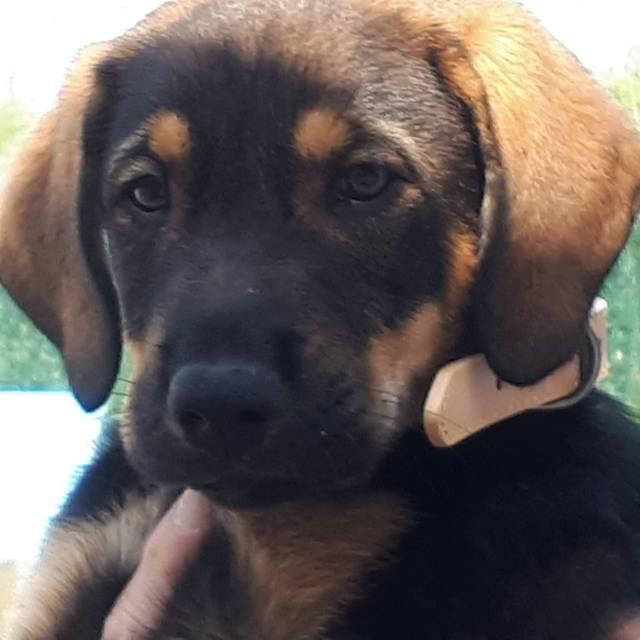 Bildertagebuch - Alba, süße Knuddelmaus möchte die Welt erobern - VERMITTELT - Hund6_10