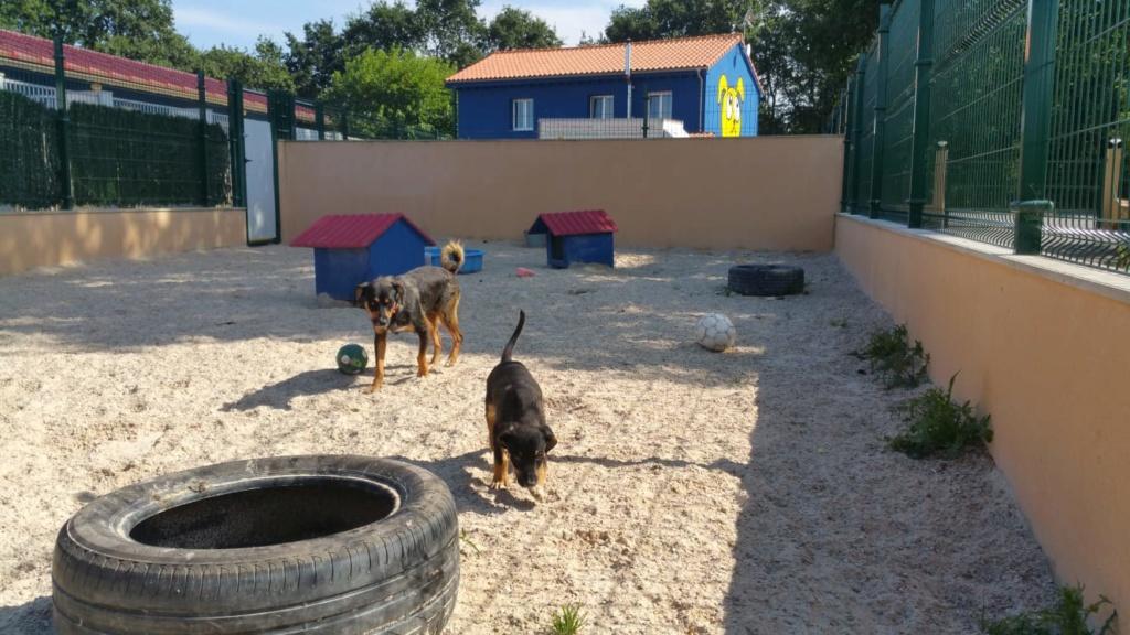 Bildertagebuch - Sika, Terriermixhündin wünscht sich endlich ein sorgenfreies Leben...VERMITTELT! Img-2026