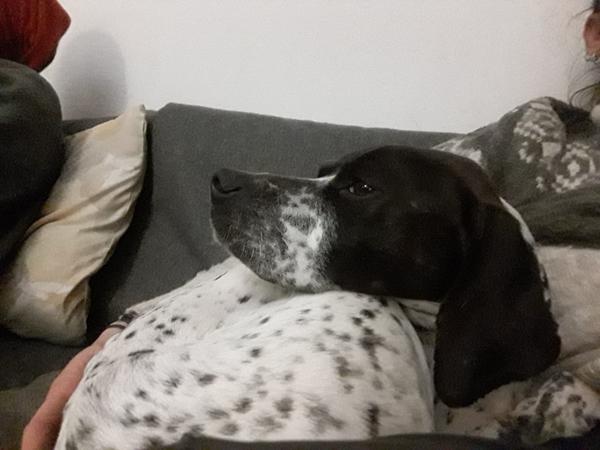 Bildertagebuch - Emily II möchte der perfekte Familienhund bei Ihnen werden VERMITTELT! Img-2124