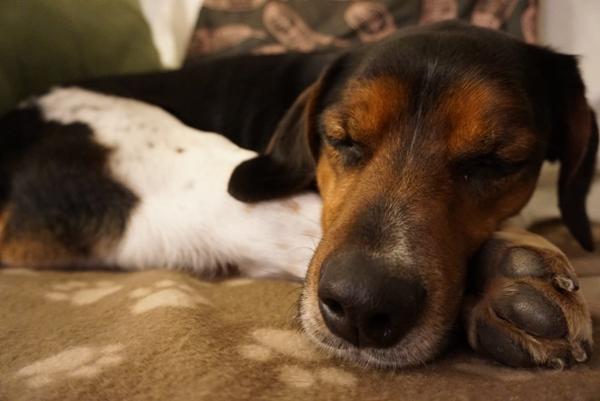 Bildertagebuch - Rio, jung, verspielt und sehr freundlich, warum setzt man so einen Hund nur aus - VERMITTELT! Img-2128