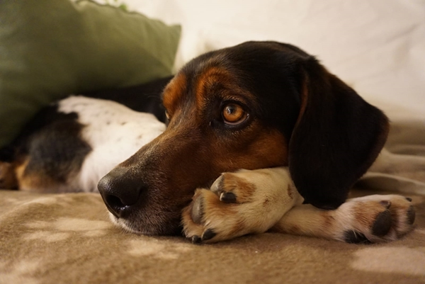 Bildertagebuch - Rio, jung, verspielt und sehr freundlich, warum setzt man so einen Hund nur aus - VERMITTELT! Img-2129