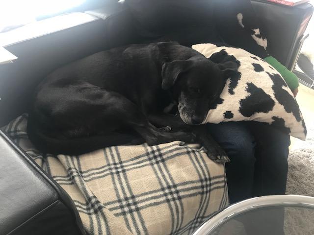 Bildertagebuch - Tuna, eine ältere Hundelady wünscht sich ein endgültiges Zuhause - VERMITTELT - Nerina11