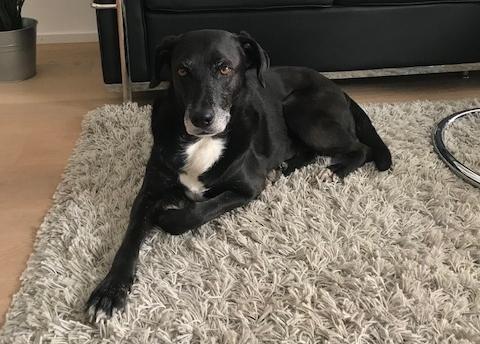 Bildertagebuch - Tuna, eine ältere Hundelady wünscht sich ein endgültiges Zuhause - VERMITTELT - Nerina12