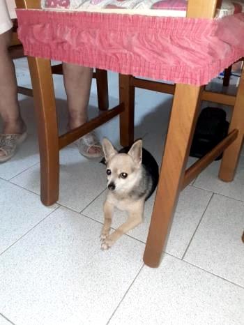 Bildertagebuch - Piccola, ihr Frauchen ist schwer erkrankt und nun droht der kleinen Maus das Tierheim -RESERVIERT- Piccol13