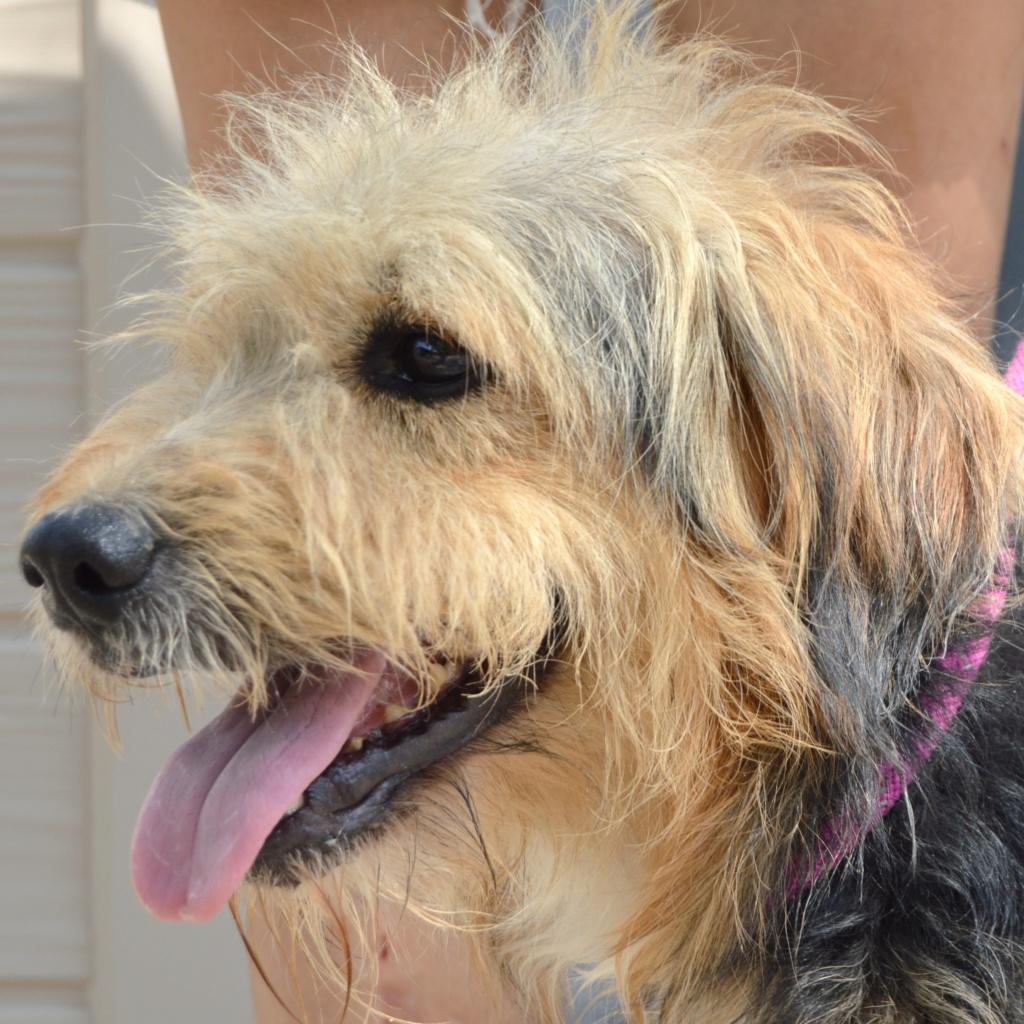 Bildertagebuch - Nedd, ein toller Hund sucht eine Familie - VERMITTELT - Resi_022