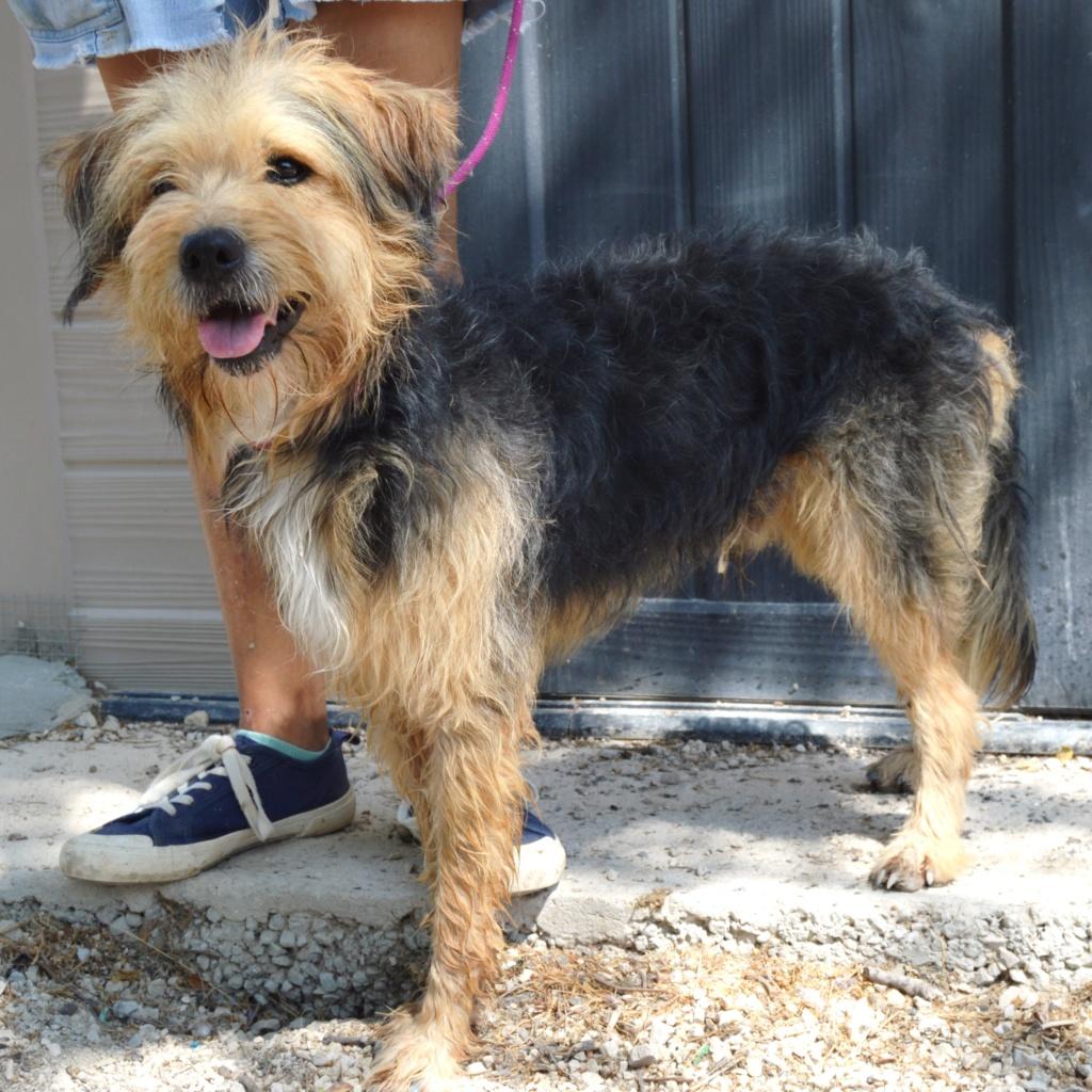 Bildertagebuch - Nedd, ein toller Hund sucht eine Familie - VERMITTELT - Resi_023