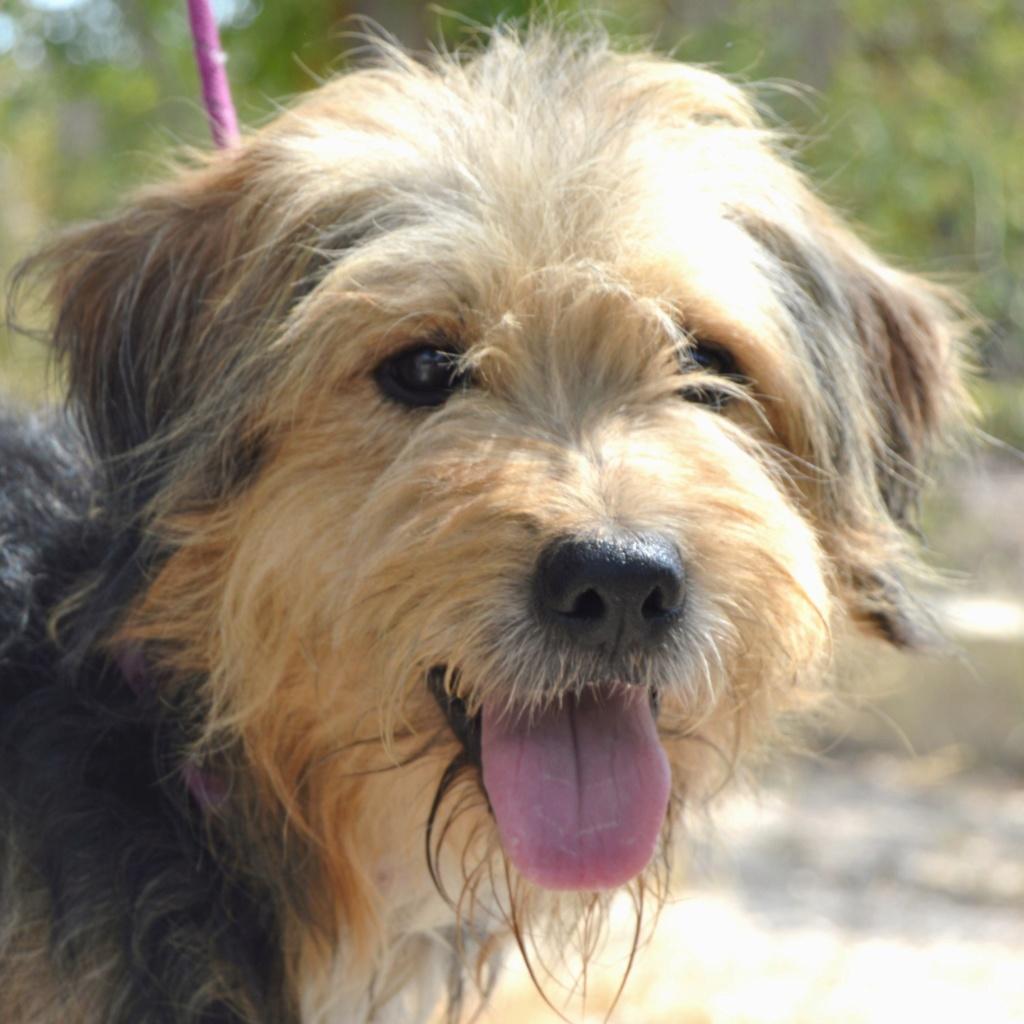 Bildertagebuch - Nedd, ein toller Hund sucht eine Familie - VERMITTELT - Resi_024