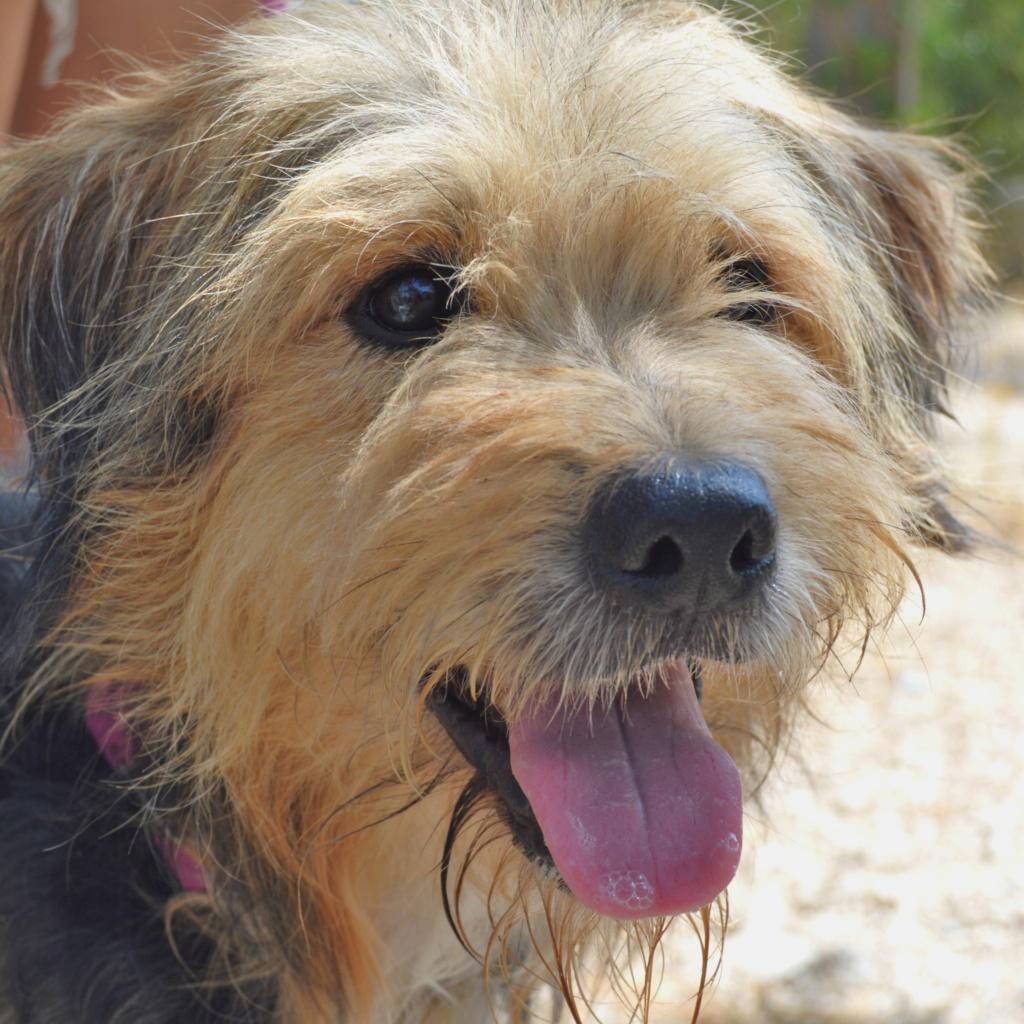 Bildertagebuch - Nedd, ein toller Hund sucht eine Familie - VERMITTELT - Resi_025