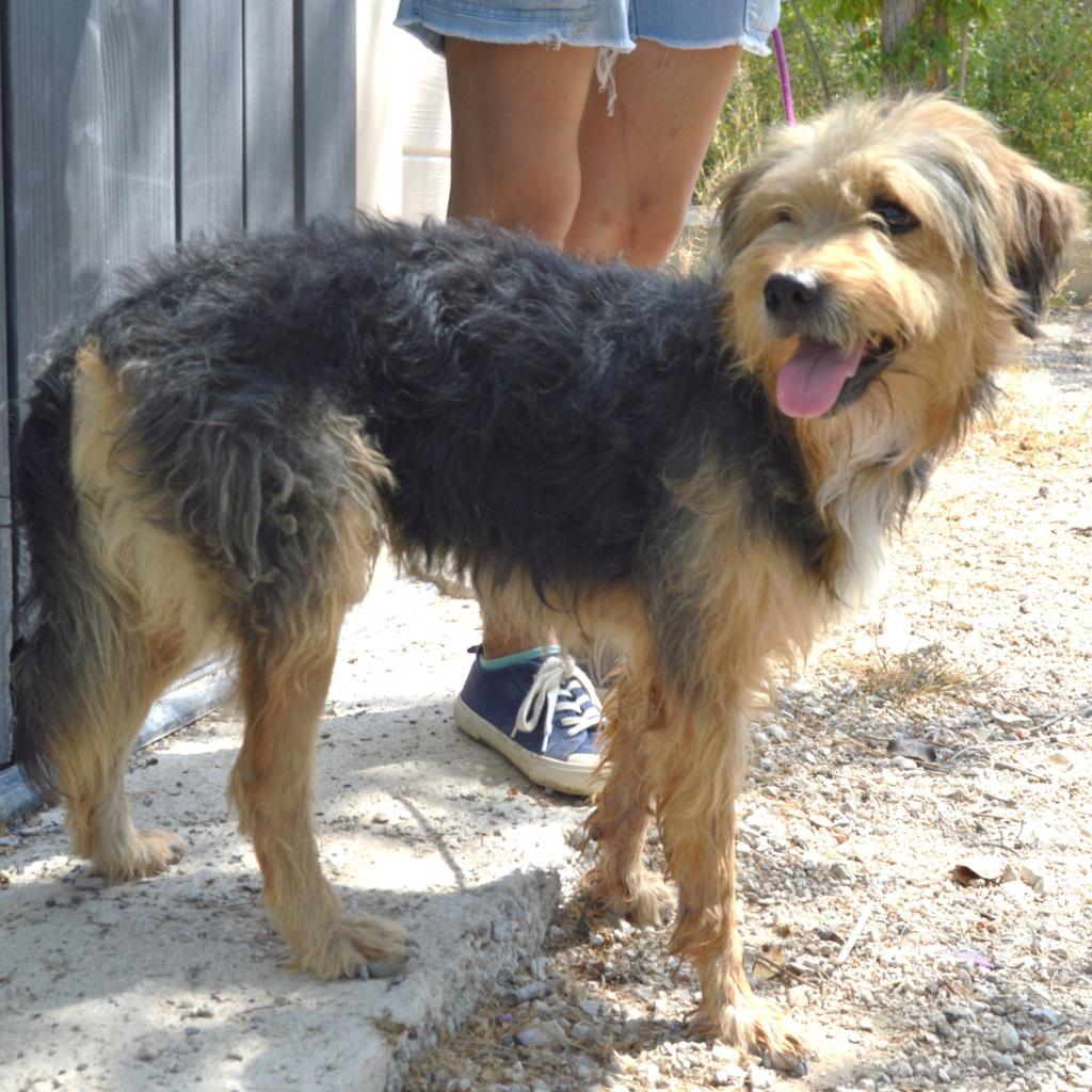 Bildertagebuch - Nedd, ein toller Hund sucht eine Familie - VERMITTELT - Resi_026