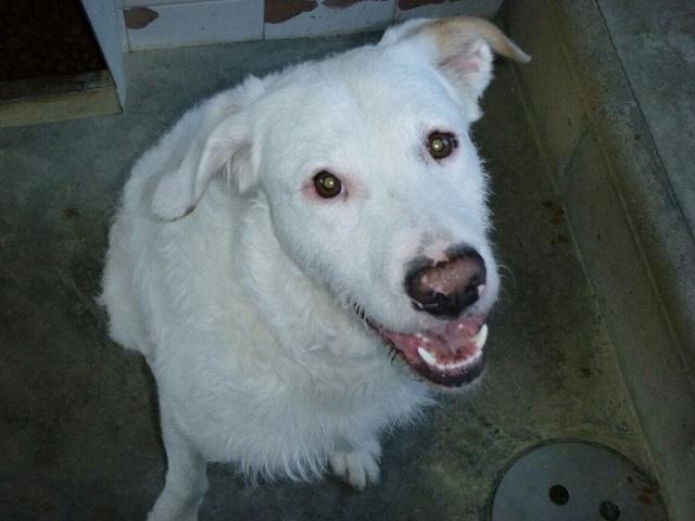 Bildertagebuch - THOR, kein Hund für Couchpotatoes - ÜBER ANDERE ORGA VERMITTELT - Thor5b10