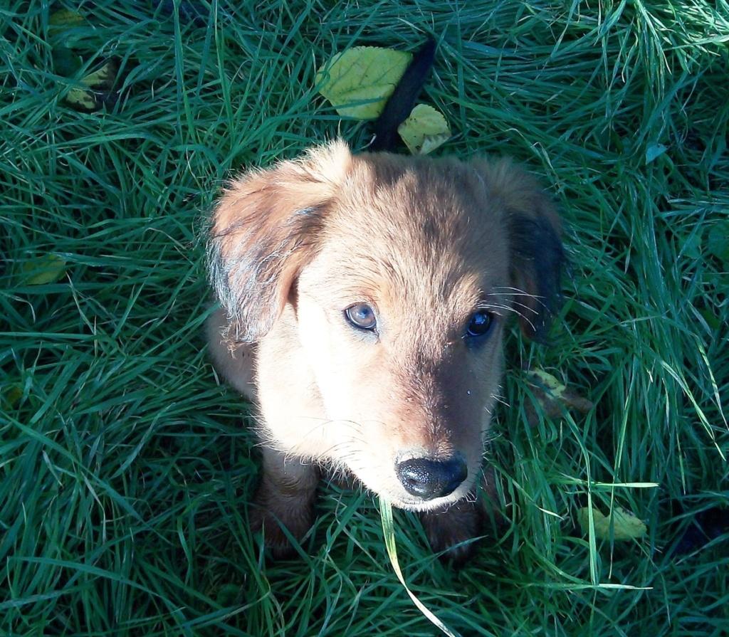Bildertagebuch - Txuxi wurde auf einem Bauernhof geboren, aber .........VERMITTELT! Txuxi010