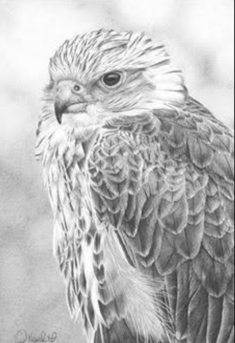 Dibujos de animales a lapiz o carboncillo - Página 3 Scre1521