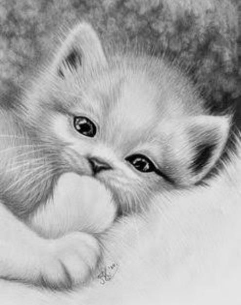 Dibujos de animales a lapiz o carboncillo - Página 3 Scre1571