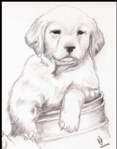 Dibujos de animales a lapiz o carboncillo - Página 3 Scre1585
