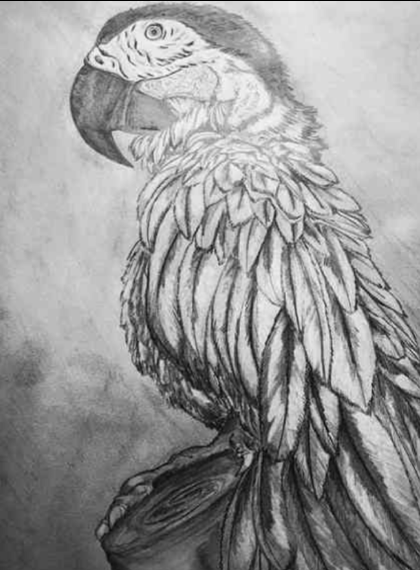 Dibujos de animales a lapiz o carboncillo - Página 3 Scre1645